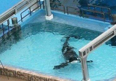 tilikum-med-pool
